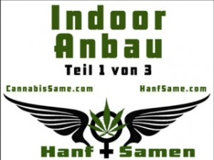Indoor-Hanfanbau-Raum1-3