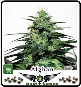 Afghan Samen, 100% Cannabis Indica