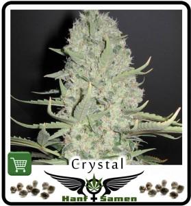 Samen_Crystal