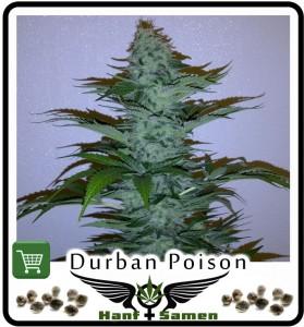 Samen_Durban_Poison