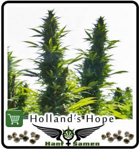 Samen_Hollands_Hope