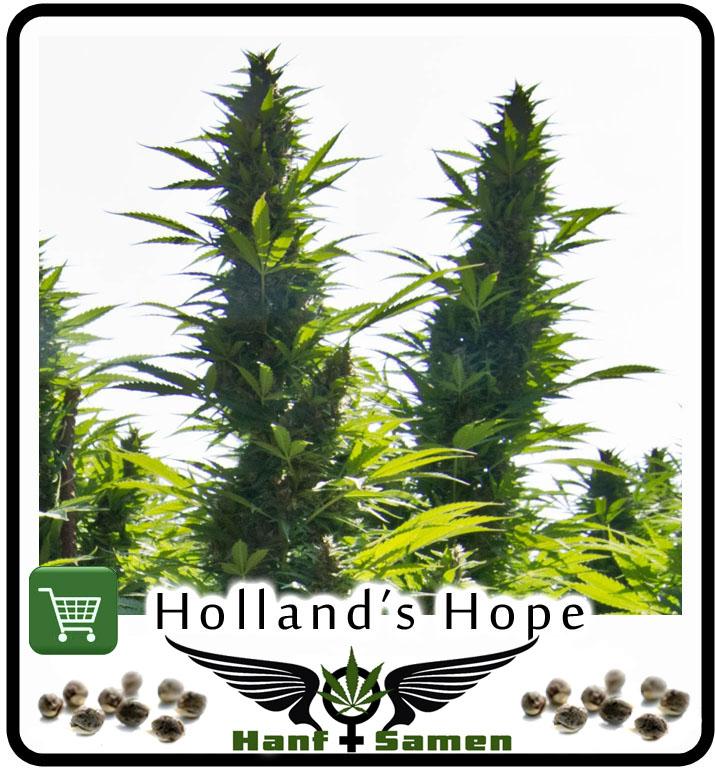 psychoaktive pflanzen kaufen