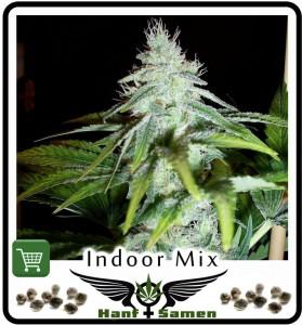 Indoor Samen, Saatgut Cannabissamen für den Innenanbau