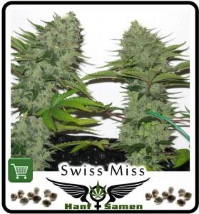 Samen_Swiss_Miss