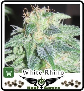 White Rhino Hanf kann wegen seines hohen THC Gehalts sehr gut als Medizin verwendet werden.