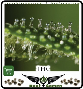 THC af hanfblatt