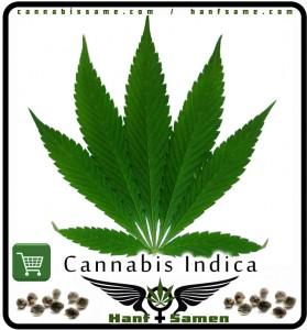 Das Blatt von Cannabis Indica
