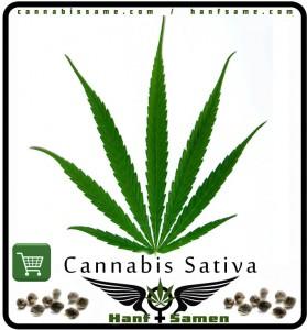 Das Blatt von Cannabis Sativa