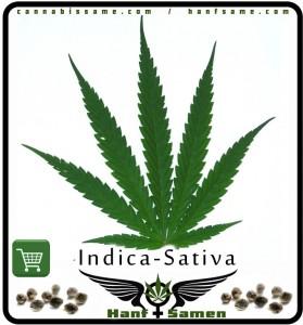 indica-sativa-hybrid-blatt